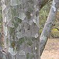 Camo Pattern bark
