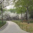 A Rare Deserted Path