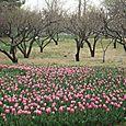 BJ-gardens 033